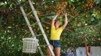 Ülkelerinde Ağacını Bile Görmeyen Turistlerin Dalından Kivi Hasadı Keyfi