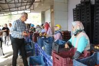 SARıLAR - Mezitli Belediyesi, Domates Üreticilerine Kucak Açtı