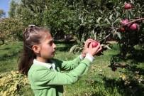ORGANİK MEYVE - Öğrenciler Yetiştirdikleri Organik Elmaları Teneffüste Tüketiyor
