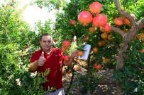 Antalya Nar Hasadına Hazırlanıyor