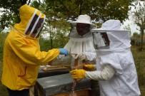 Arı Zehri Üretim Kursu Yapıldı