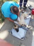 Uludağ'da Otomobil Çarpan Köpek Hayata Tutundu