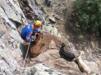 Dağda Mahsur Kalan 4 Keçi Kurtarıldı
