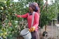 POTASYUM - Ölümsüzlük Meyvesi Hünnabın Faydaları Saymakla Bitmiyor