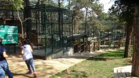 (Özel) Hayvanat Bahçesinde Depremi Yaşayan Hayvanların Paniği Güvenlik Kamerasında