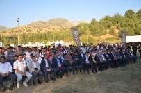 Terör Bitti Dağlar Şenlendi, Festivaller Yapılıyor