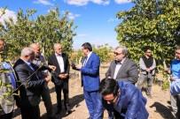 EKREM ÇELEBİ - Cumhurbaşkanı Başdanışmanı Topçu 'Kalecik Karası' Bağ Bozumuna Katıldı