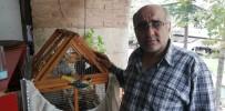 HEDİYELİK EŞYA - Sakat Kuşu Petshopta Gördü, Sahiplendi