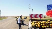 Balotu Kavunu Tezgahlarda Yerini Aldı