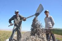Elbistan'da 'Siyah Altın' Hasadı Başladı