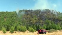 TRAFİK MÜDÜRLÜĞÜ - GÜNCELLEME 2 - Muğla'da Orman Yangını