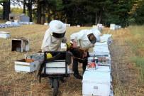 HAKKARİ YÜKSEKOVA - Muğla 3,5 Milyon Arı Kovanına Ev Sahipliği Yapıyor