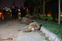Otomobil Koyun Sürüsüne Daldı Açıklaması 2 Yaralı