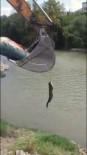 AMATÖR BALIKÇI - Tuttuğu Balığı Kepçe İle Sudan Çıkarttı