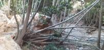Dev Kaya Kütlesi Onlarca Ağacı Kökünden Kopardı