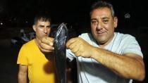 AMATÖR BALIKÇI - Bodrum'da Oltaya Vantuz Balığı Takıldı