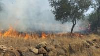 Burhaniye'de Makilik Alanda Çıkan Yangın Zeytinliklere Sıçradı
