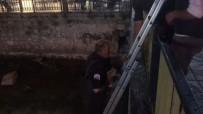 Çoruh Nehrinde Mazgalda Mahsur Kalan Yavru Kediye İtfaiye Kurtardı
