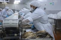Denizli'den Dünyanın 80 Ülkesine Yıllık 6 Bin Ton Tütsülenmiş Balık Gönderiyorlar