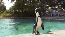 HAZİRAN AYI - Hayvanat Bahçesi Sakinlerinin Beslenme Saati