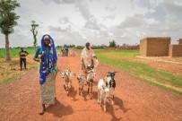 BURKINA - İyilik Derneği, Afrika'nın Derdine Süt Keçileri İle Koşuyor