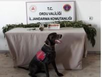 Ordu'da Uyuşturucu Operasyonları Sürüyor