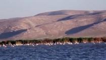 BÜYÜK GÖÇ - Rehabilite Edilen Gölet Kuş Sesleriyle Şenleniyor