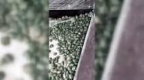 SARP SINIR KAPISI - Sınır Kapısında 2 Bin 500 Su Kaplumbağası Yakalandı