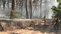 Bursa'da Orman Yangını 20 Dönüm Alanı Kül Etti