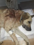 Mahallenin Baktığı Sokak Köpeğini Tüfekle Vurdular