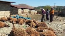 Kurtların Saldırdığı 15 Koyun Telef Oldu