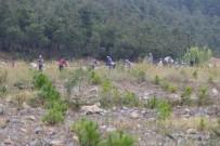 (Özel) Madenler Çıkarıldı...20 Bin Fıstık Ve Akasya Maden Sahasına Dikildi