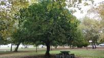 Ağaçların Kardeşliği