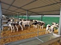 Sütün Yolculuğu Lüleburgaz'dan Malezya'ya