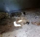 YAVRU KÖPEK - İzmir'de 12 Yavru Köpeğin Zehirlenerek Öldürüldüğü İddiası