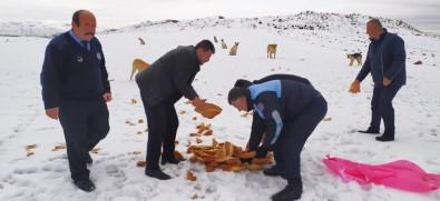 Sincan Belediyesi Soğuk Havada Sokak Hayvanlarını Unutmadı