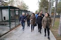 Sungurlu Belediye'si Hayvan Bakımevi Kuracak