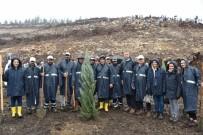 Binlerce Fidan Yunusemre'de Toprakla Buluştu