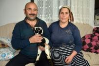 Kuzuyu Evlerinde Anne Şefkatiyle Büyütüyorlar