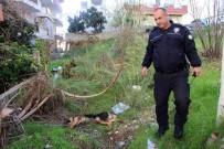İTİRAF - 'İnsanlara Zarar Verse Daha Mı İyi Olacak' Deyip, Köpeği Bıçaklayarak Öldürdü
