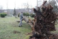 ŞİDDETLİ FIRTINA - (Özel) Ağaç Yıkılmalarına Röntgen Ve Tomografi İle Önlem