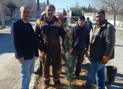 Samsat'ta Refüjlerde Ağaçlandırma Çalışması