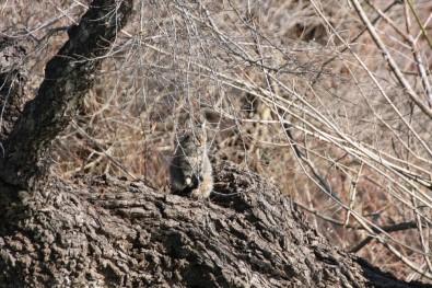 Şelaledeki Su Seviyesi Yükselince İki Kedi Ağaçta Mahsur Kaldı