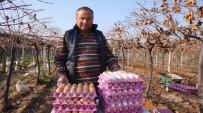GÜBRE - Üzüm Üreticisi 'Gezen Tavuk' Hayalini Gerçekleştirdi