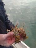 ORMAN MÜDÜRLÜĞÜ - Eğirdir Gölü'nde Kaçak Avlanan 100 Kilogram Canlı Kerevit Göle İade Edildi