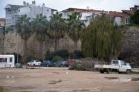 Sinop'ta Ağaç Bakım Çalışmaları Sürüyor