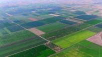 TARıM SIGORTALARı HAVUZU - 'TARSİM' Kapsamında Çiftçiye 13,5 Milyon TL Devlet Desteği