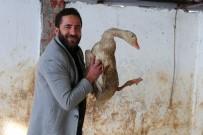 Varto Büyükbaş Hayvanlarını Satıp Kaz Çiftliği Kurdu