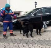 MASAJ - (Özel) Temizlik İşçisinin Sokak Köpeklerine Süpürgeyle Masaj Yaptığı Isıtan Görüntüler Kamerada
