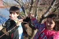 Tokat'ta Yalancı Baharda Ağaçlar Çiçek Açtı